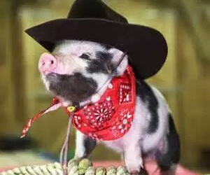 cute, pig, and cowboy image