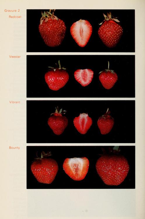 strawberry, fruit, and art image