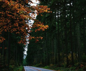 nature, autumn, and road image