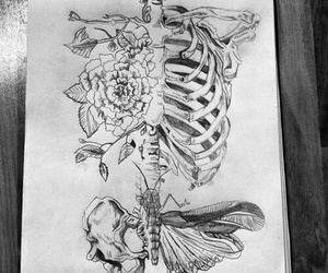 bones, butterfly, and draw image