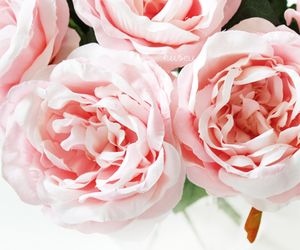 delicate, nice, and pink image