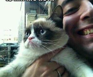 grumpy cat, cat, and funny image