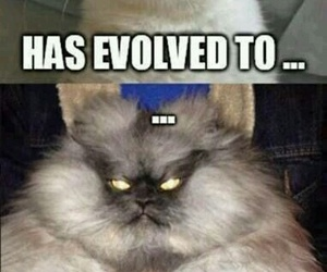 fun, lol, and grumpy cat image