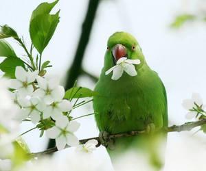 bird, animal, and flowers image