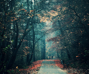 autumn, path, and woods image