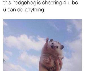 animal, blue, and hedgehog image