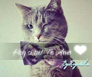 te amo, 💜, and solo tu image