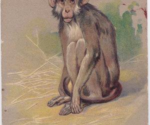 monkey, vestiesteam, and carte postale image