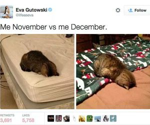 cats, tweet, and funny image
