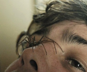 spider and boy image