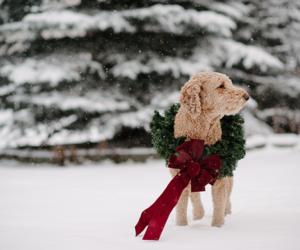 animals, christmas, and snow image