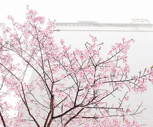 pink, white, and nature image