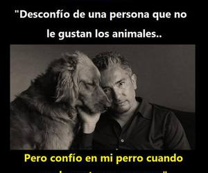 dog and cesar milan image