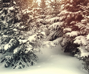 cold, forest, and holiday image