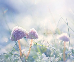 mushroom and winter image