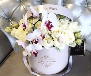 flowers, white, and beautiful image