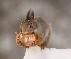 squirrels image