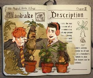 harry potter, art, and mandrake image