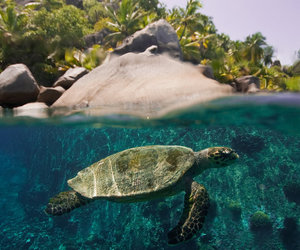 turtle, nature, and sea image