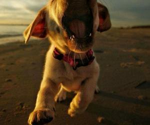 amazing, dog, and happy image
