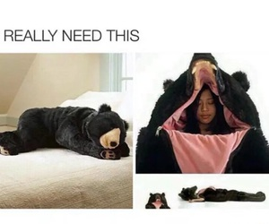 funny, bear, and sleep image