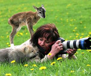 animal, photography, and nature image