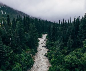 nature, forest, and green image