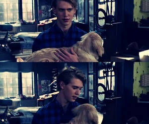 dog, austin butler, and the carrie diaries image