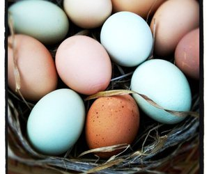 easter, egg, and eggs image