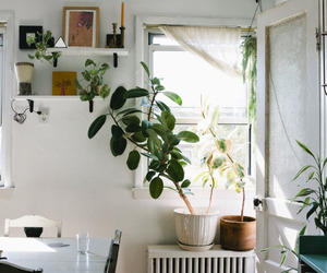 home, plants, and room image