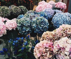 flowers, pretty, and blue image
