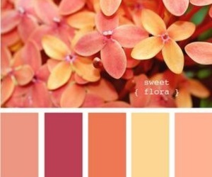 flowers, color, and sweet image