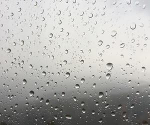 apartment, rain, and rose image