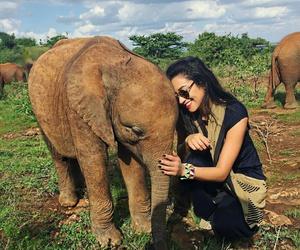 elephant, shay mitchell, and animal image