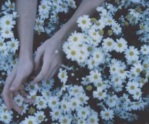 flowers, garden, and grunge image