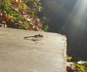 dragonfly, pretty nature, and fall image