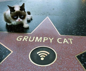 cat, grumpy cat, and stars image