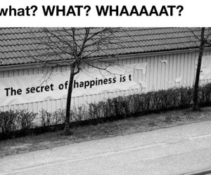 happiness, funny, and secret image