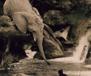 elephant, cat, and animal image