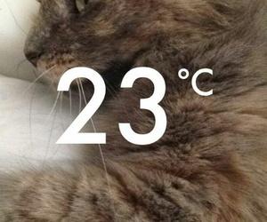 cat, snapchat, and snap image