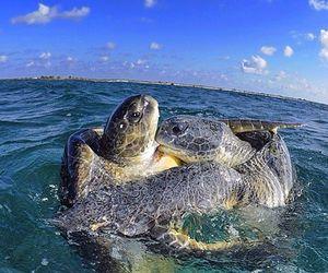 ocean, oceano, and sea turtles image