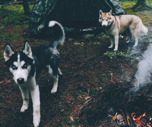 dog, animal, and camping image