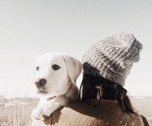 dog and winter image