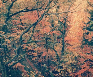 autumn, cold, and color image