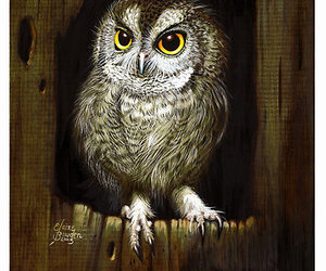 bird, owl, and nuitt image