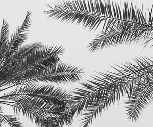 black and white and palm image