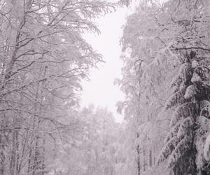 snow, winter, and winterwonderland image
