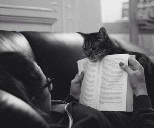 cat, b&w, and book image