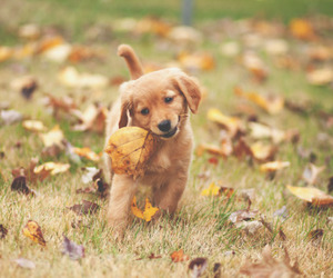 cute, autumn, and puppy image