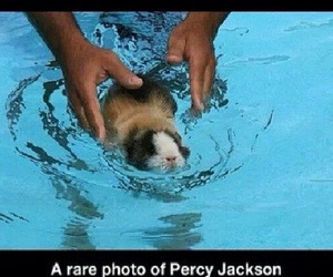 percy jackson, hamster, and pjo image